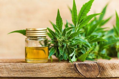 Treat Epilepsy With CBD Oil